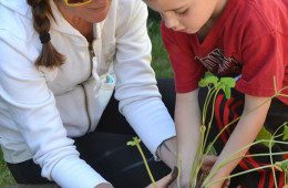 Woman helping child with plant
