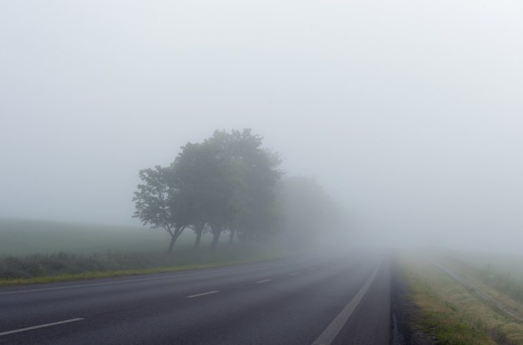 Tree and road in fog