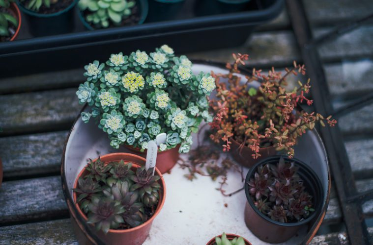 plants on table