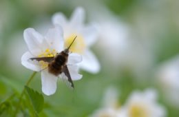 Tips for saving pollinators
