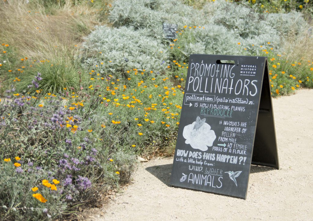 A sign near the pollinator garden at the Natural History Museum of Los Angeles County informs visitors about the concept of pollinator gardens. Gardens that support butterflies, birds and bees are increasingly popular nationwide as pollinator populations face serious threats.