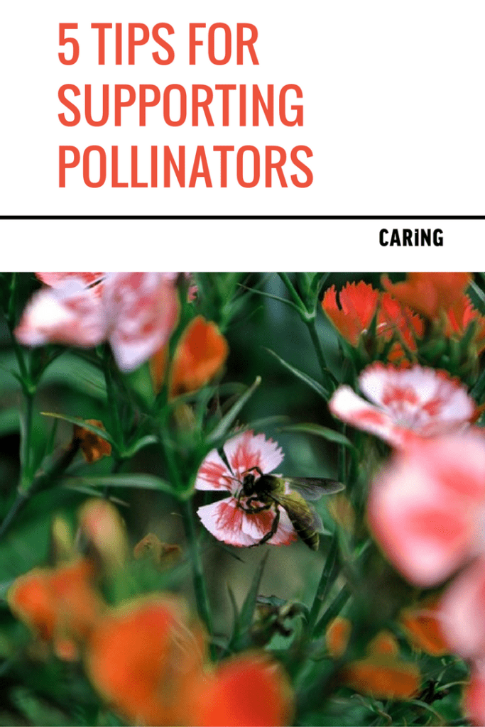 tips-supporting-pollinators