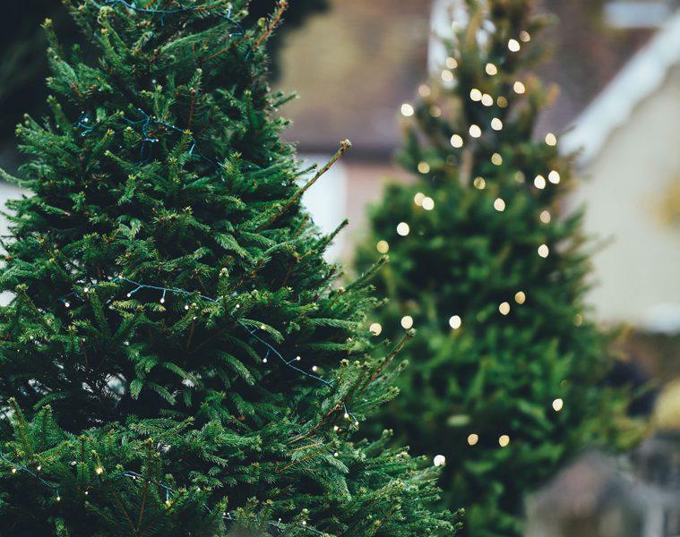 glory-at-christmas