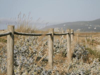 Fence outside