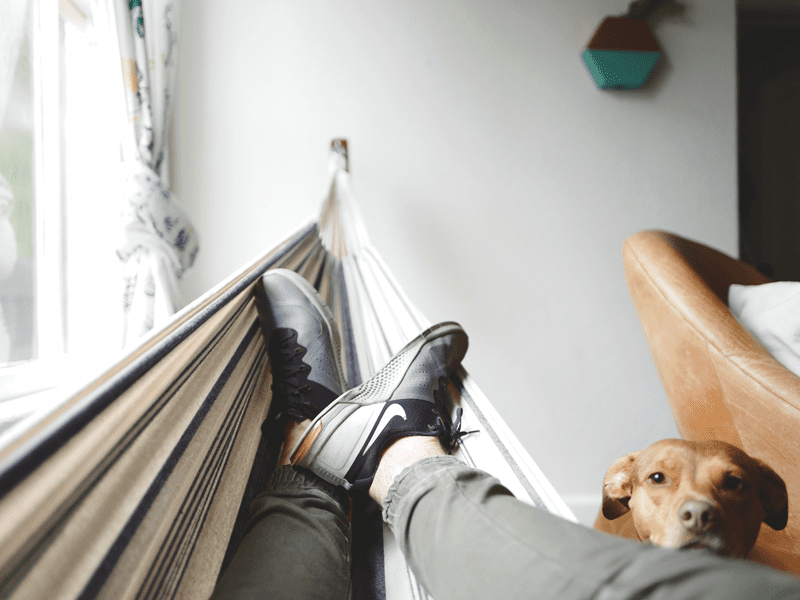 person laying in hammock next to dog