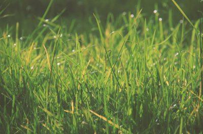 Closeup of Long Blades of Grass