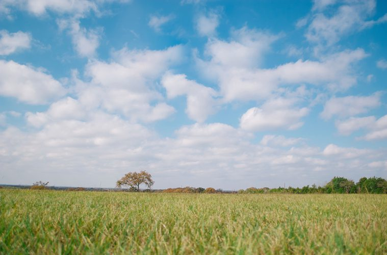 Cloudy Blue Sky Over Field and Lone Tree
