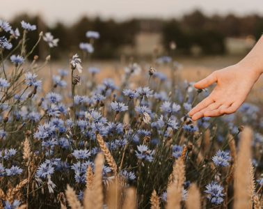 hand moving over flowers in field during day