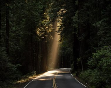 Sunlight Shining Through Trees onto Road