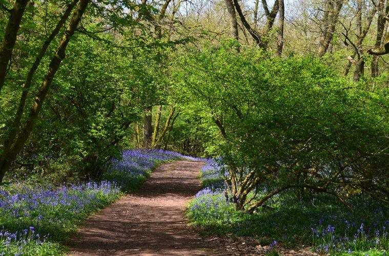 Path Through Trees with Flowers on Side